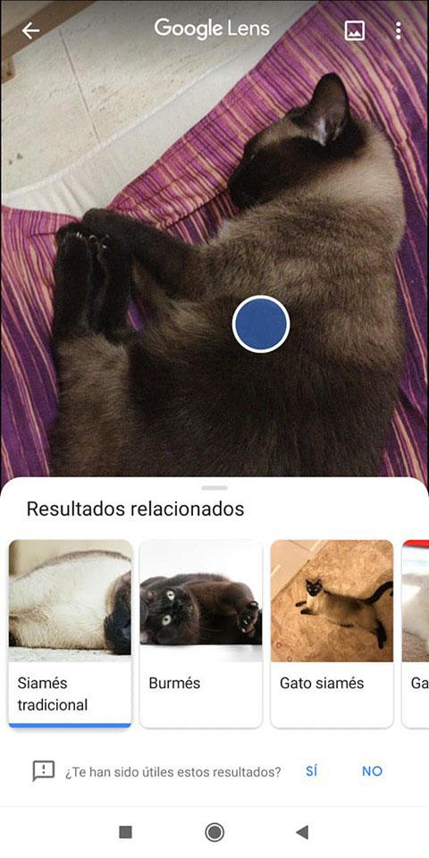 جوجل لنس تحديد الحيوانات