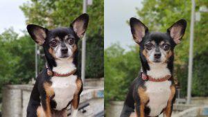 Photo selfie dog مي 9 تي برو vs ون بلس 7 برو
