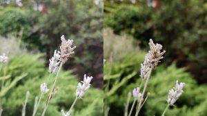 صور زهور مي 9 تي برو vs ون بلس 7 برو