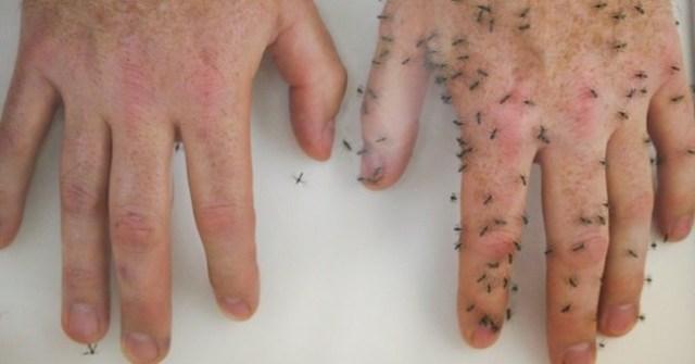 6 طرق طبيعية للحفاظ على البعوض بعيدا عن جسمك 1