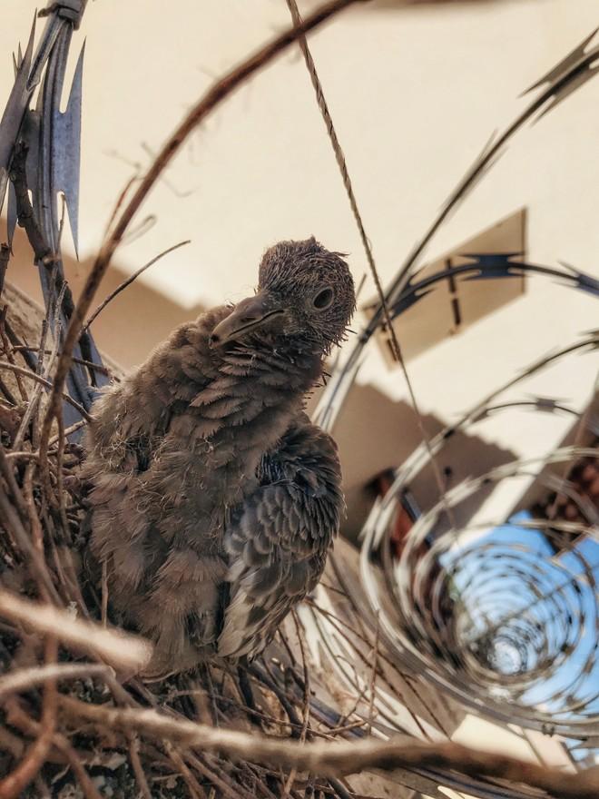 صور القراء # 274 - OnePlus 5 في Sete Lagoas (MG) 12