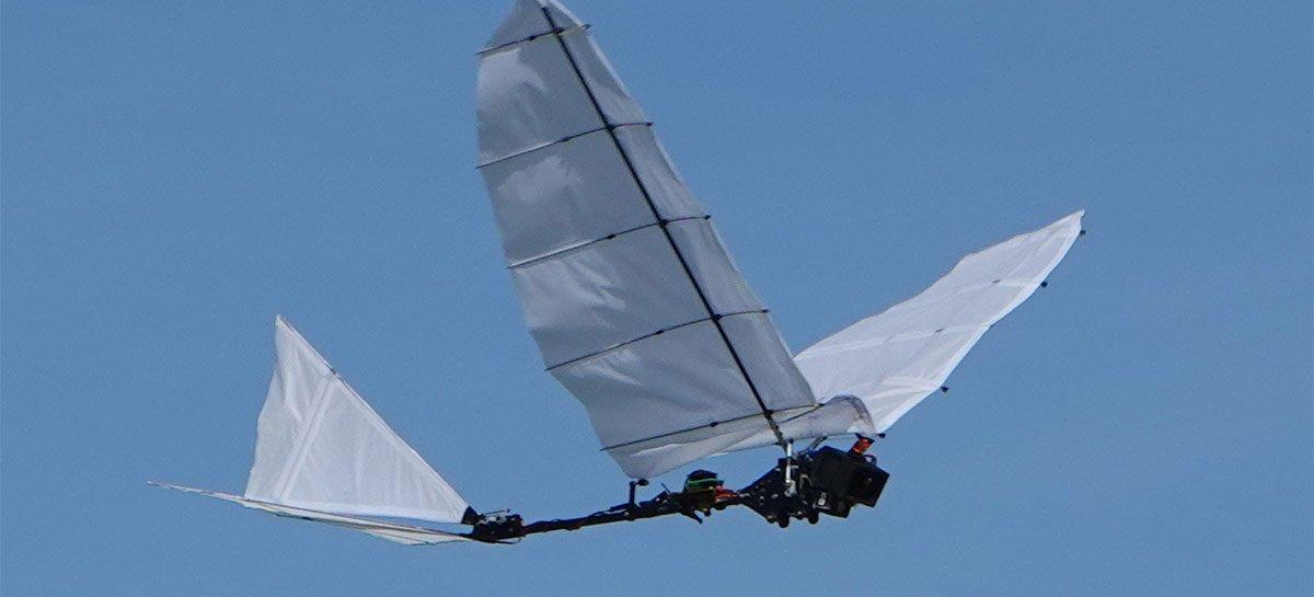 يمكن أن يكون تقليد الطيور هو التطور الكبير التالي لتصميم الطائرات بدون طيار 1